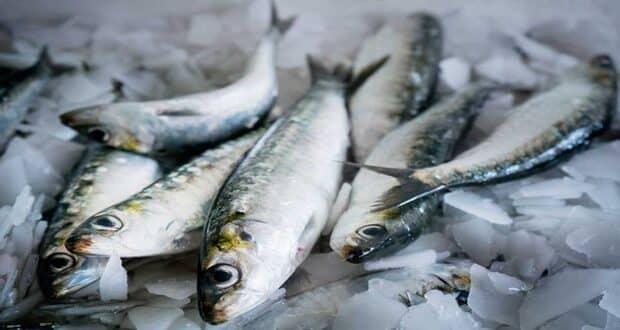 sardinha engorda